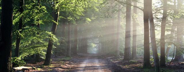 筑波大学とはどんな大学?現役筑波大生が校風や生活などを紹介!森と言われるほど自然が豊か!