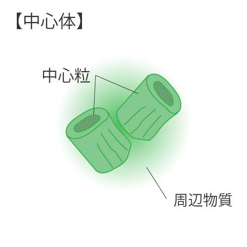 細胞の構造⑤中心体