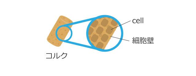 フックによる細胞(cell)の発見