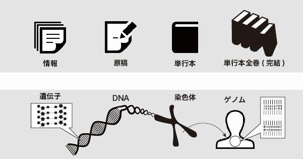 DNAの構造を徹底解説!~塩基の種類から発見の歴史まで~②DNA、染色体、ゲノムの関係