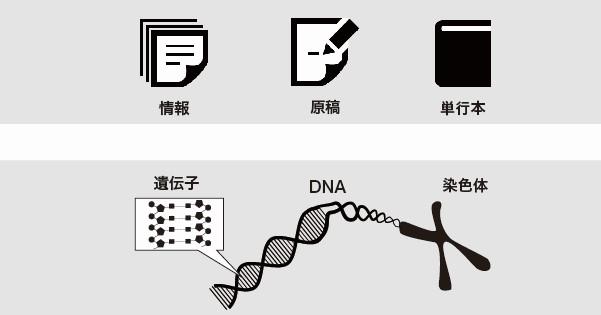 DNAの構造を徹底解説!~塩基の種類から発見の歴史まで~①DNA、染色体の関係