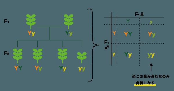 F2世代の構造図