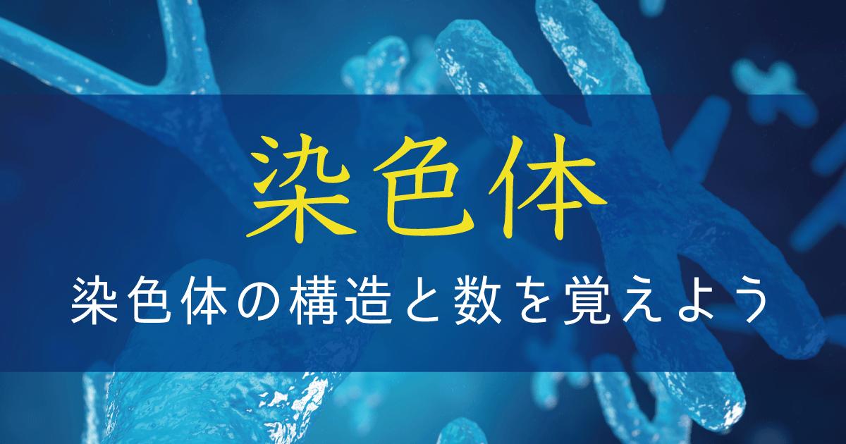 染色体の構造と数を覚えよう【遺伝子の担い手としての染色体】