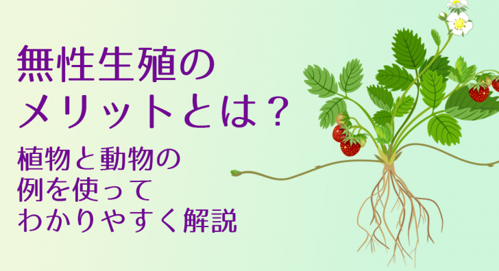 無性生殖のメリットとは?植物と動物の例を使ってわかりやすく解説