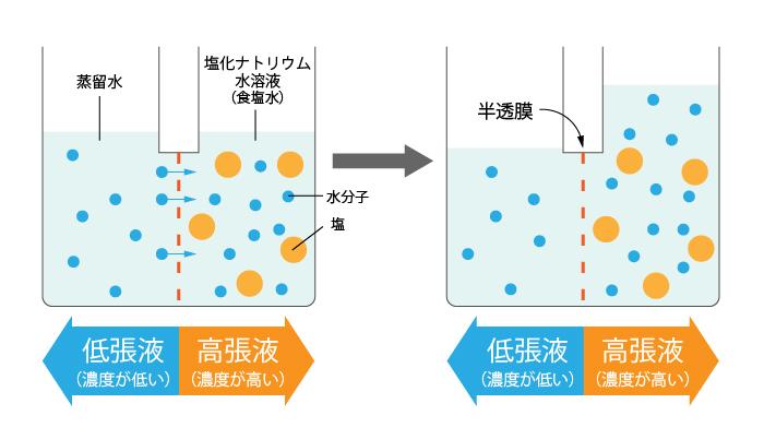 浸透圧とは③高張液と低張液