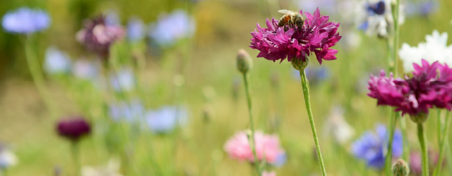 有性生殖⑥花の色と虫