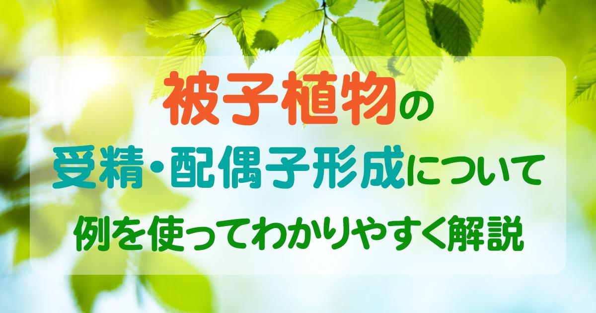 被子植物 アイキャッチ画像