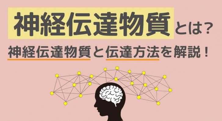 神経伝達物質とは?ニューロンとの関係や種類、覚え方をマスターしよう