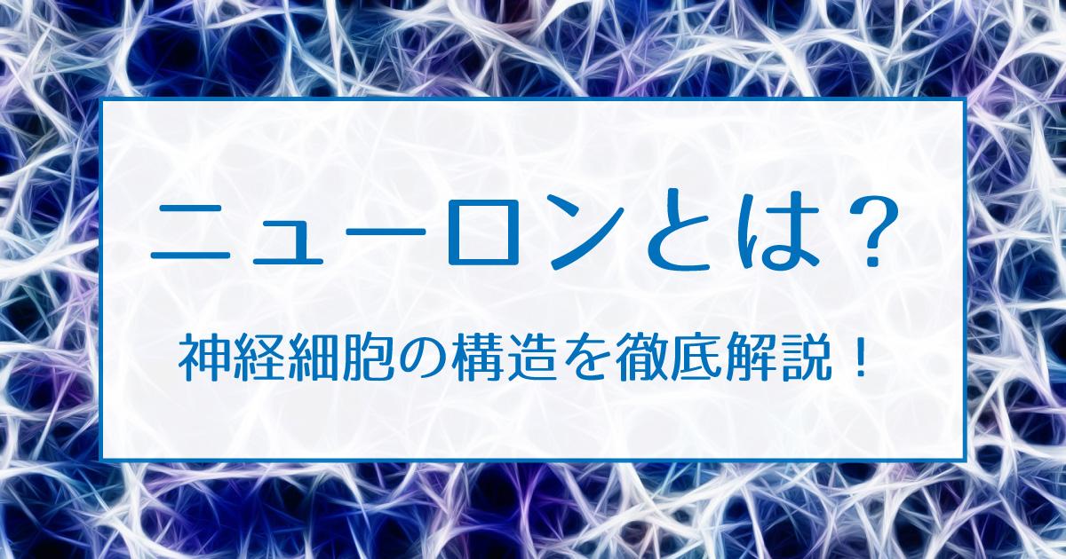 ニューロン アイキャッチ