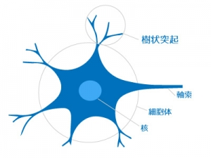 ニューロン 構造