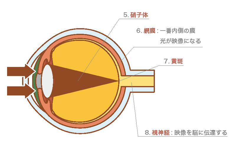 光を映像情報に変換する段階の図