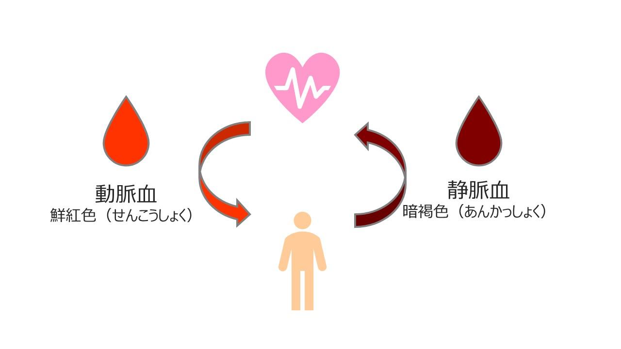 動脈血と静脈血