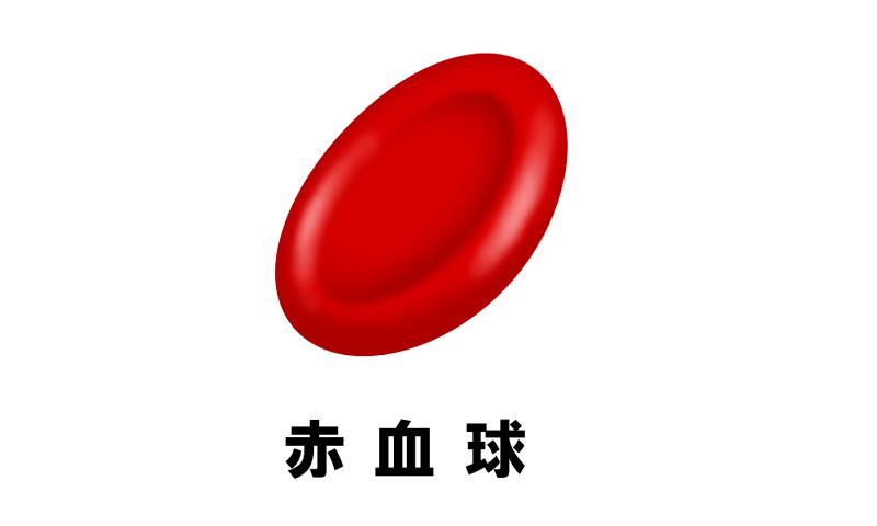 赤血球のイメージ図